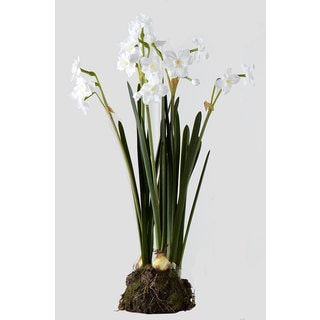 Sage & Co 6-inch x 18-inch Paper White Bulb Garden (Pack of 4)