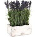 Imax Potted Lavender
