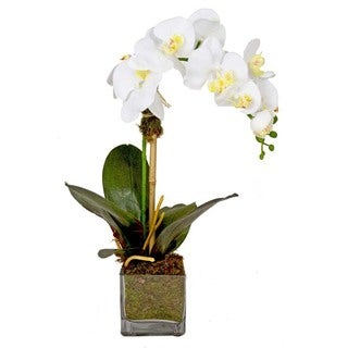 White Phalaenopsis Silk Orchid and Bamboo in Glass Cube