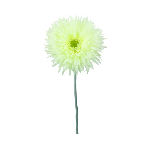 Cream 40-inch Gerbera Daisy Decorative Flower (Set of 12)
