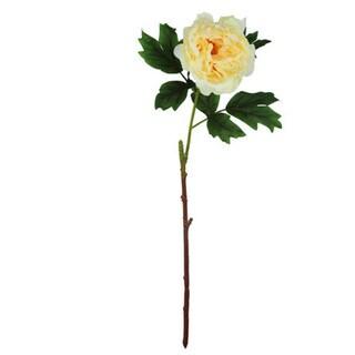 Peach 20-inch Peony Stem Decorative Flower (Set of 12)