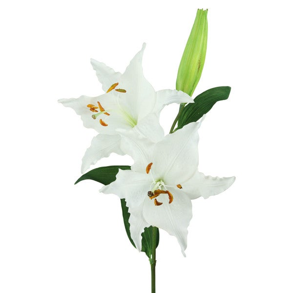 White Tiger Lily Decorative Flower (Set of 12)