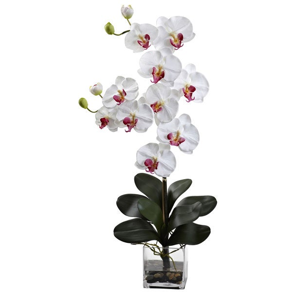 Double Giant Phalenopsis with Vase