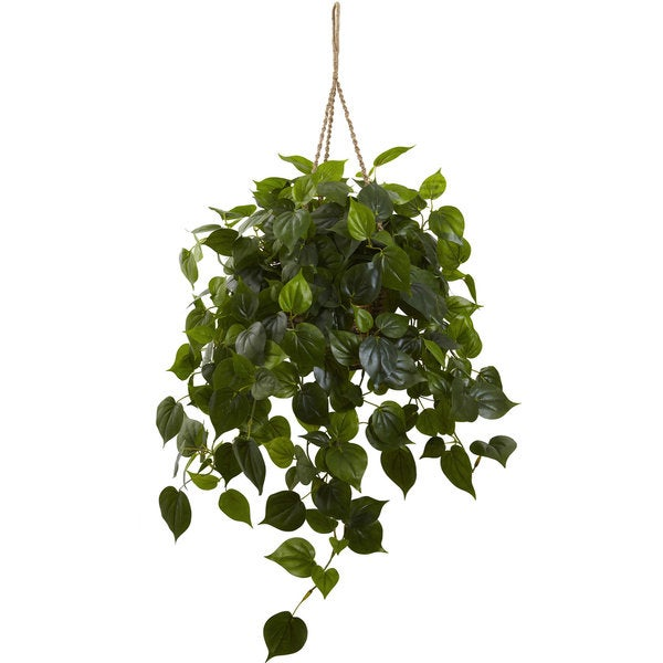 Philodendron Hanging Basket Uv Resistant Indoor Outdoor