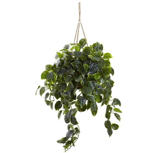 Pothos Hanging Basket