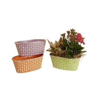 Wald Imports Assorted 9-inch Oblong Pastel/ Dots Distressed Containers (Set of 3)