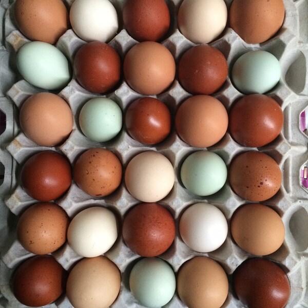Solace Organic Farms Free Range Eggs (5 Dozen)