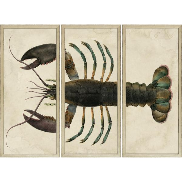 Lobster - Sectioned Framed Art Print