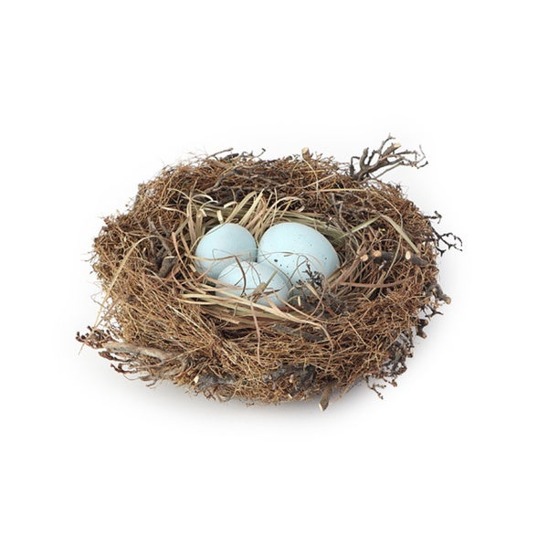 6.5-inch x 2-inch Bird Nest with Faux Eggs Large (Pack of 12)