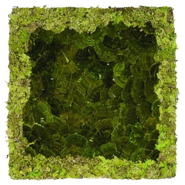 16-inch Lichen Mat (Pack of 6)