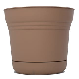 Bloem Saturn Curated Planter (Pack of 6)