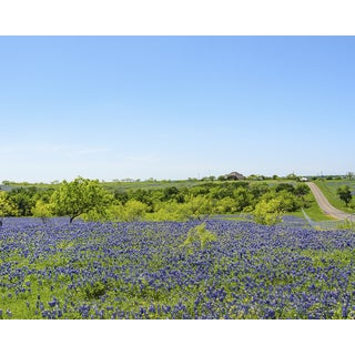 Stewart Parr 'Blue Bonnets of Ennis Texas by a country road' Unframed Photo Print