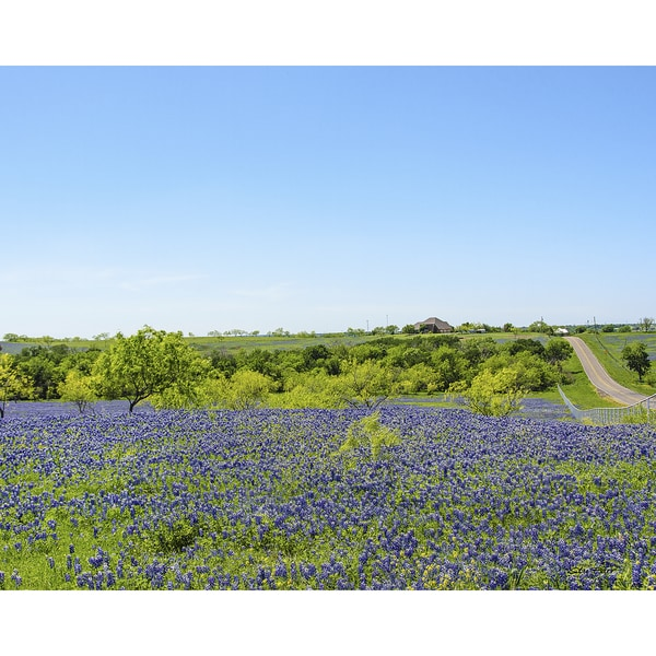 Stewart Parr 'Blue Bonnets of Ennis Texas by a country road' Unframed Photo Print 14661208