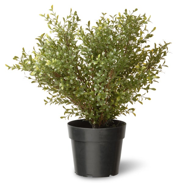 24-inch Argentia Plant with Green Pot