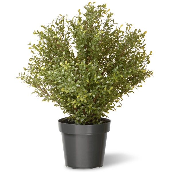 30-inch Argentia Plant with Green Pot