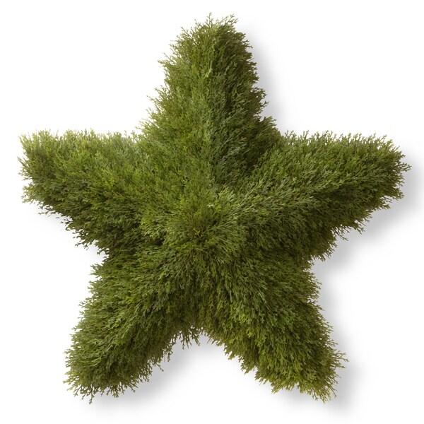 36-inch Juniper Star