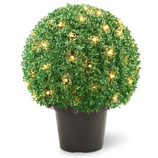 22-inch Mini Boxwood Ball Shaped Topiary Tree in Round Green Growers Pot with 70 Clear Lights