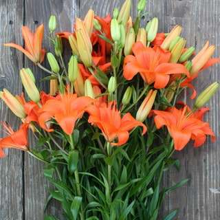 The Bouqs Volcano Collection 'Recognize' Deluxe Lily Bouquet