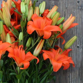 The Bouqs Volcano Collection 'Recognize' Single Lily Bouquet