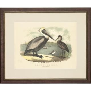 Spoonbill and Brown Pelican Framed Art Print