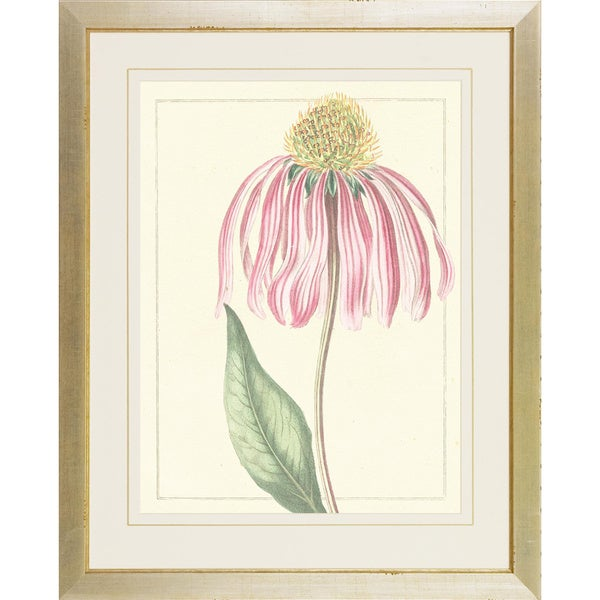 Pink Botanical Softness Framed Art Print