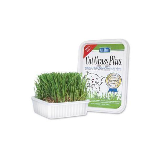 Gimborn Products Cat Grass Plus 150Gm (Tub)