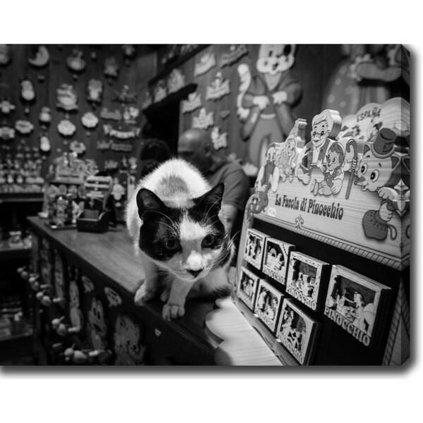 Cat' Photography Canvas Art