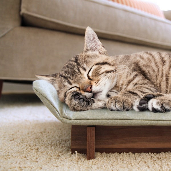 Kathy Ireland Loved Ones Cat Lounge-Green