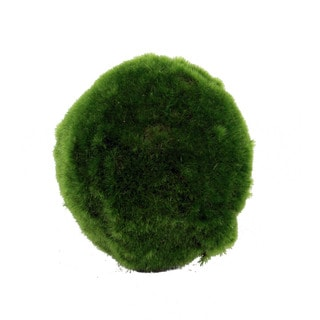 Decorative Moss Orb (Set of 6)
