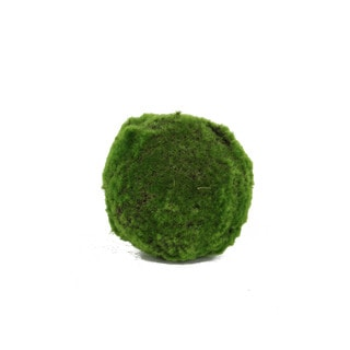 Medium Decorative Moss Orb (Set of 6)