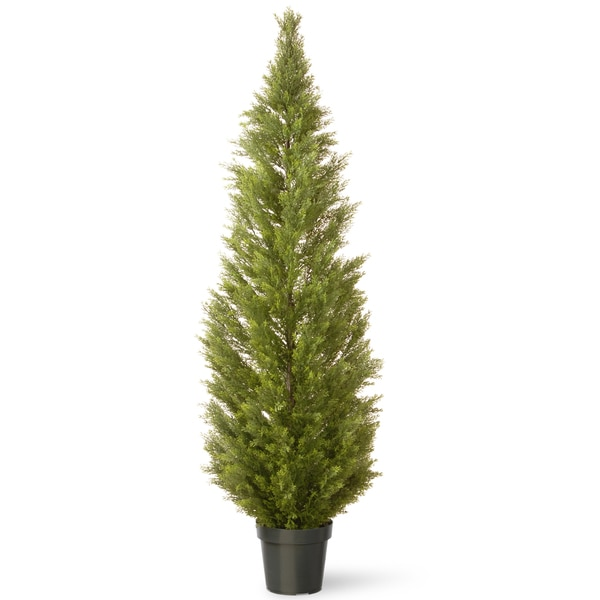 72-inch Arborvitae with Green Pot