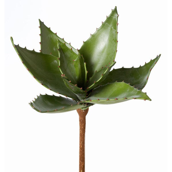 9.5-inch Aloe Vera (Pack of 12)
