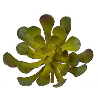 9.5-inch Aeonium Succulent (Pack of 12)