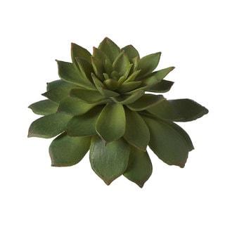 Sage & Co 3.5-inch Sempervivum Succulent Mini (Pack of 6)