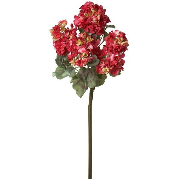 18-inch Geranium Bush (Pack of 12)
