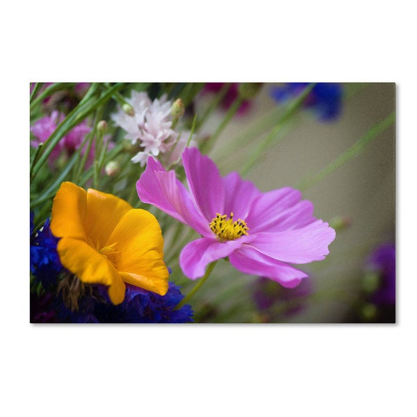 Philippe Sainte-Laudy 'Cosmos of the Fields' Canvas Art