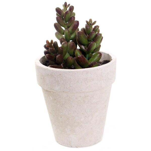 6-inch Mini Jade Succulent In Pot (Pack of 6)