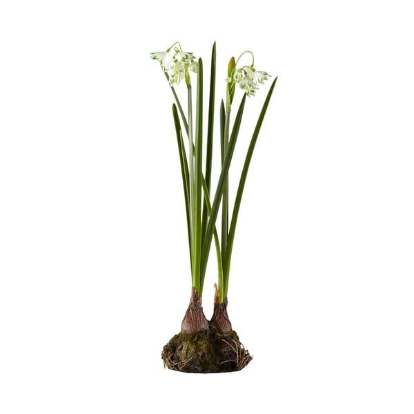 15-inch Snowdrop Bulb Garden (Pack of 6)