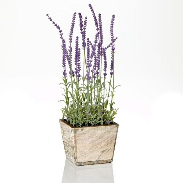 17-inch Lavender In Wood Pot (Pack of 4)