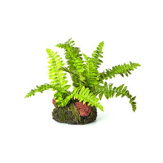 6-inch Leather Fern Plant Drop In Garden (Pack of 6)