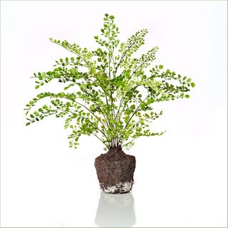 18-inch Maidenhair Fern Drop In (Pack of 2)