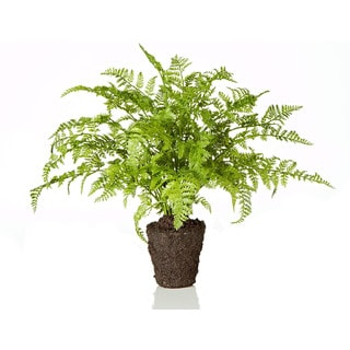 11-inch Rabbit Foot Fern (Packed 1 Each)