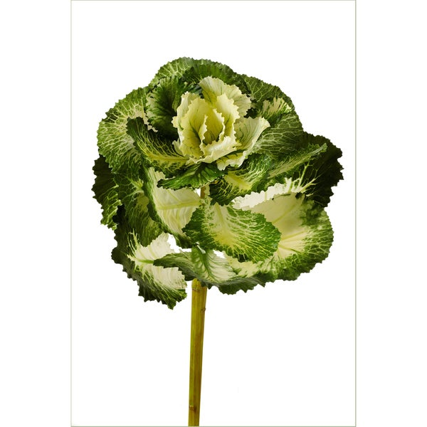 22-inch Kale Stem (Pack of 6)