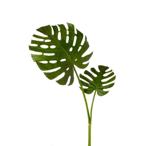 49-inch Monstera Leaf Bundle X2 (Packed 1 Each)
