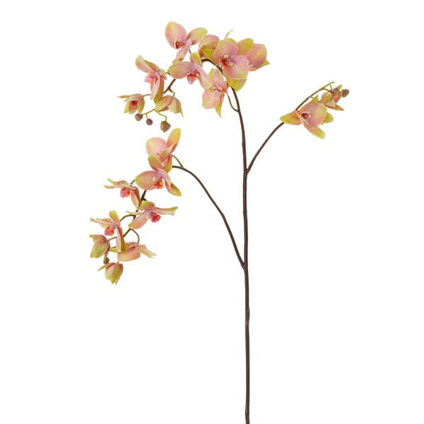 Mauve Phalaenopsis Orchid Spray X3 (4-pack)