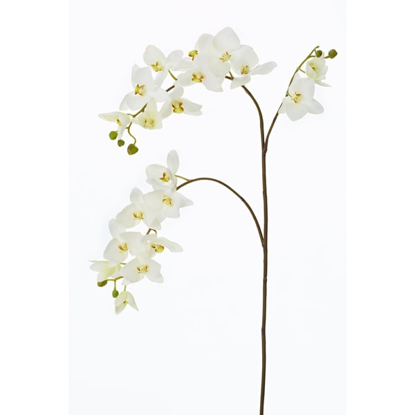 White Phalaenopsis Orchid Spray X3 (4-pack)