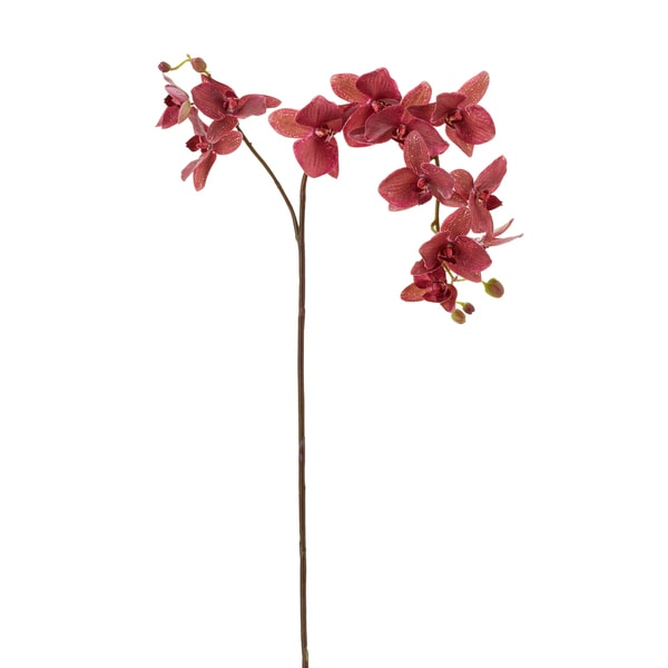 Burgundy Phalaenopsis Orchid Spray X2 (3-pack)