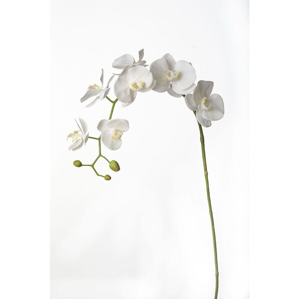 39-inch Phalaenopsis Stem (Pack of 4)