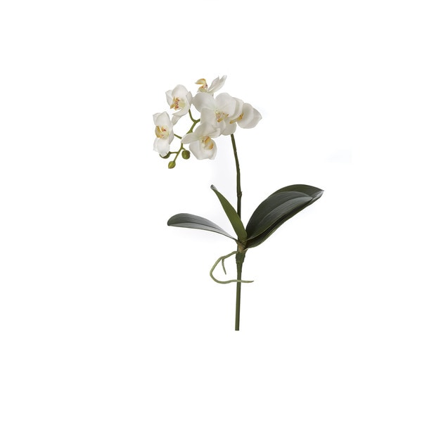 17-inch Phalaenopsis Stem (Pack of 8)