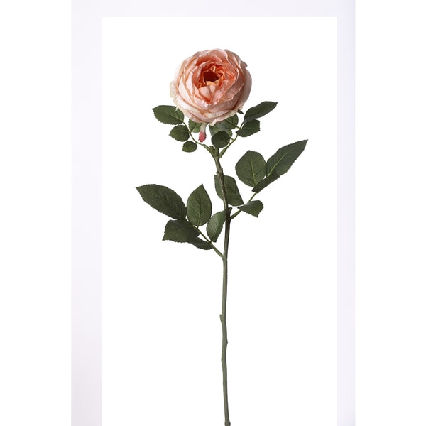 30-inch Petit Cabbage Rose Stem (Pack of 12)